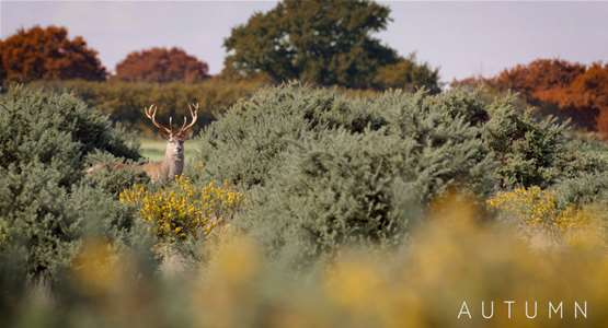Autumn on The Suffolk Coast -