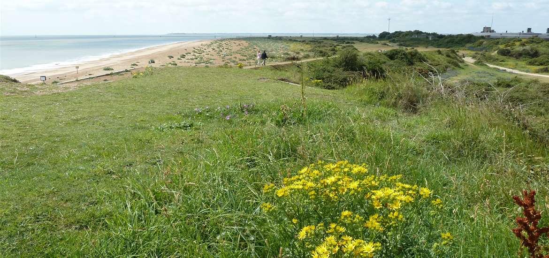 Discover Landguard - Landguard Nature Reserve