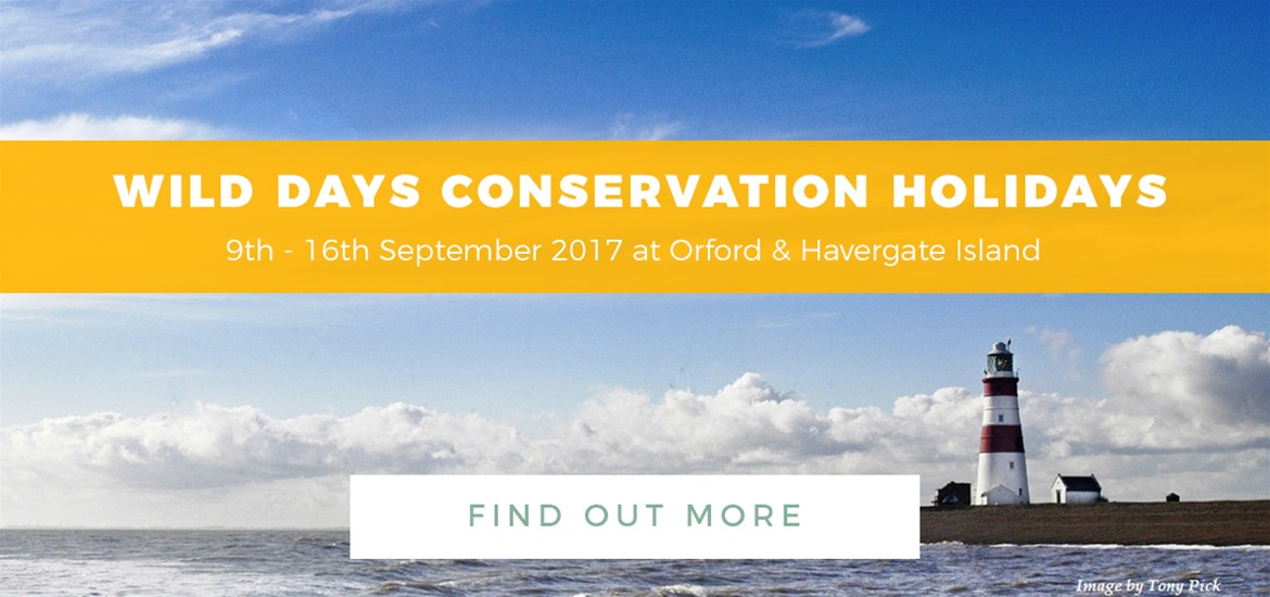 Banner ad - Wild Days Conservation Holidays - TTDE - 8th May - 4th June 2017