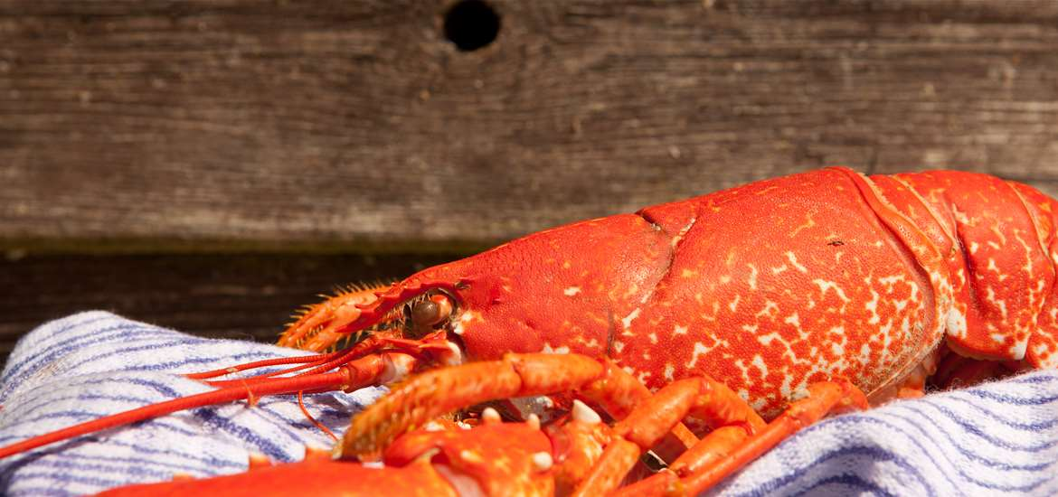 Seafood Feasts on The Suffolk Coast