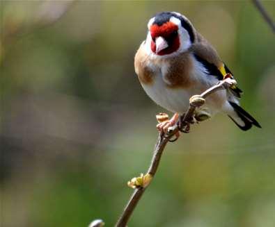 Planet Birdsong