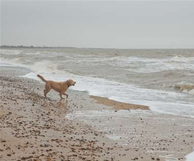 Top 10 Dog Friendly Things to Do - Retriever in the Sea - Credit Emily Fae