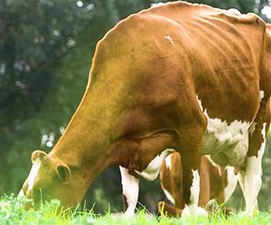 Articles - Festive Fayre - Fen Farm Dairy