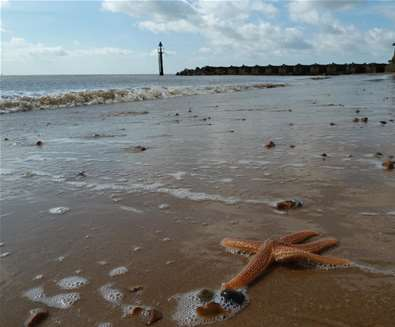 Articles - Top 5 Places to Watch the Sunrise - Landguard Nature Reserve
