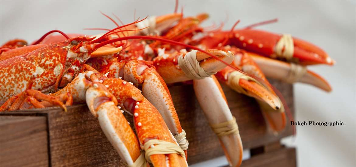 Articles - Aldeburgh Food and Drink Festival 2016 - Lobsters