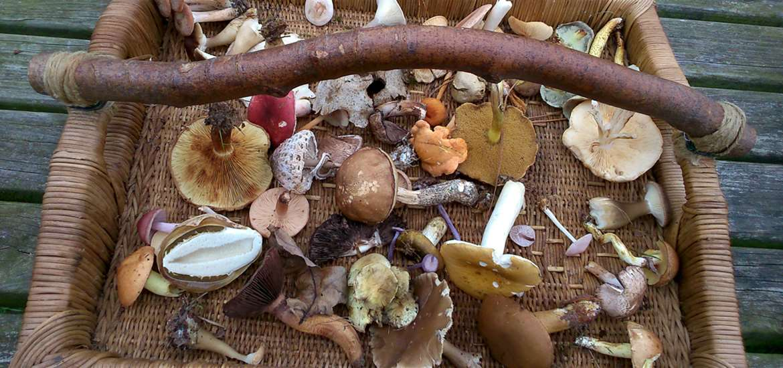 Suffolk Coast - Autumn Foraging