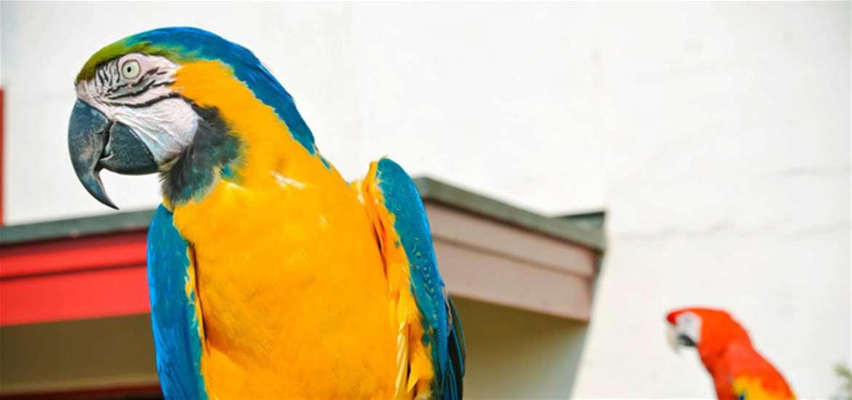 Pleasurewood Hills - Parrot - Attractions