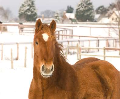 Suffolk-Punch-Trust-winter-time