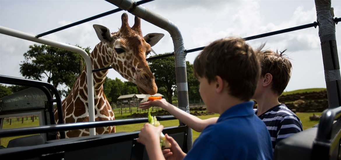 Things to do attractions - Africa Alive - Kessingland - Feeding the giraffes