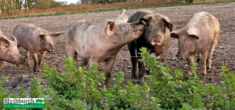 Blythburgh Free Range Pork