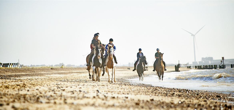 Horses on Lowestoft Beach