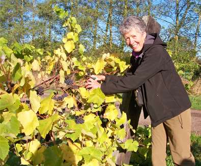 A Taste of Wine in the Suffolk Countryside