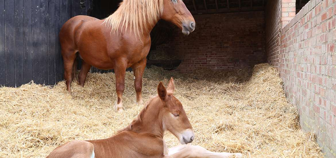 TTDA - Easton Farm Park - Foal with Mum