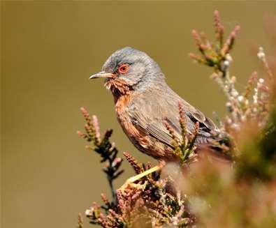 Bird Identification Walks on..