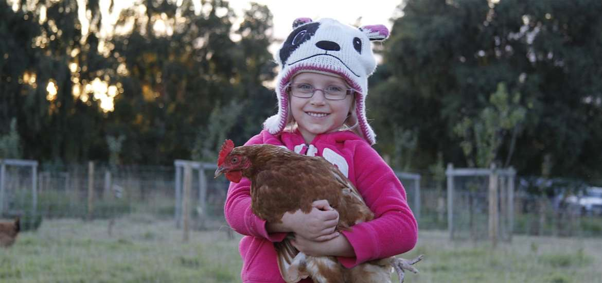 FD - Blue Rabbit Cafe & Smallholding - Girl with chicken
