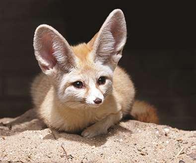TTDA - Africa Alive - Fennac Fox