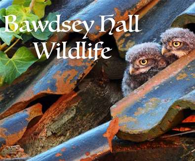 Bawdsey Hall Wildlife Watching, Photography Workshops and Hide Hire