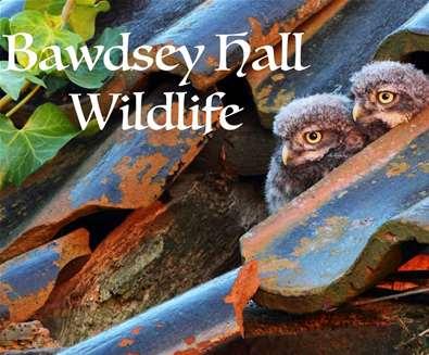 Bawdsey Hall Wildlife Photography