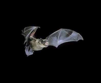 Bat Walk at Dunwich..