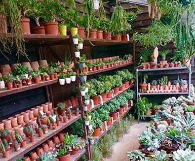 Urban Jungle Plant Nursery & Café