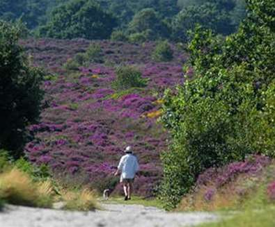 National Trust Dunwich Heath
