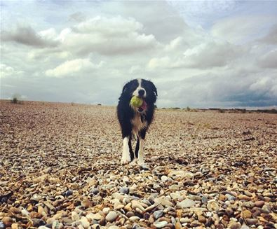 Summer dog friendly walks - Harry