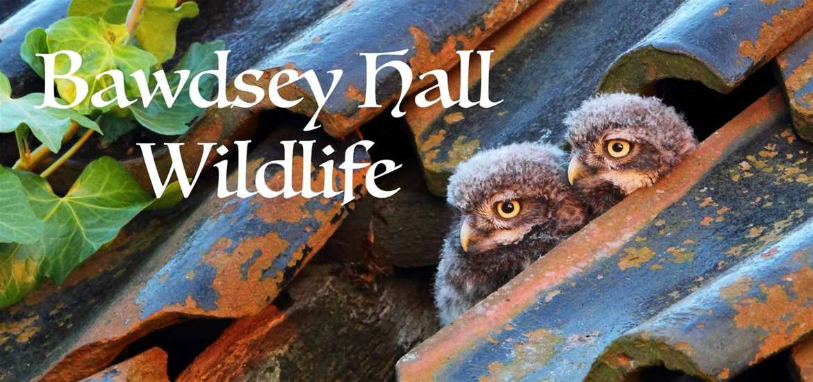 TTDA - Bawdsey Hall Wildlife - Baby Owls