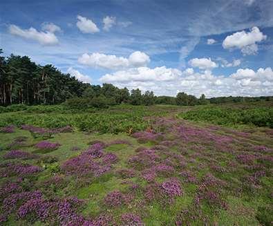 Suffolk Coast & Heaths..