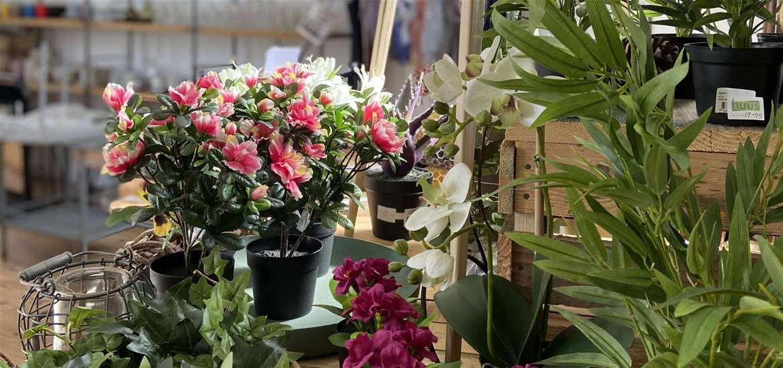 TTDA - HUUS - Plants