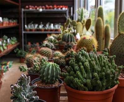 2019 Cactus and Chilli..