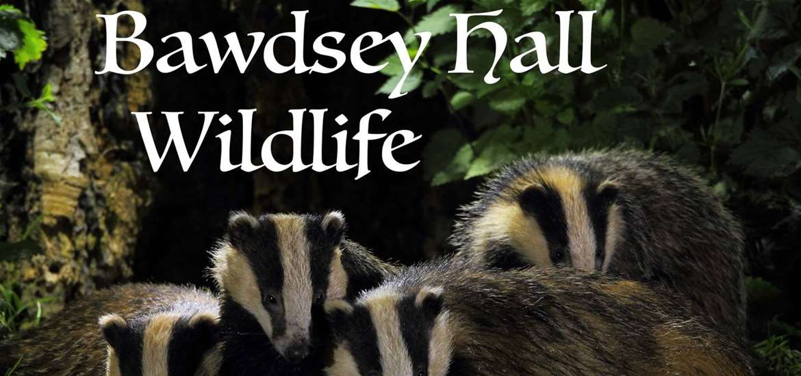 TTDA - Bawdsey Hall Wildlife - Badgers