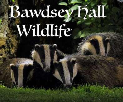 Bawdsey Hall Wildlife