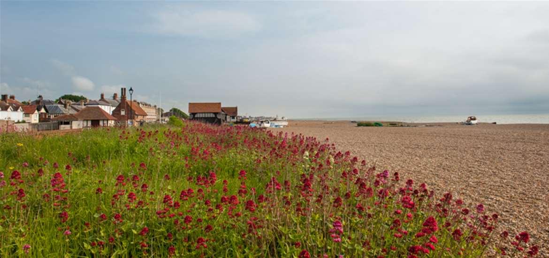 TTDA - Aldeburgh Beach - flora and fauna