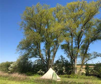 WTS - Wild Riverside Camping - Tent in field