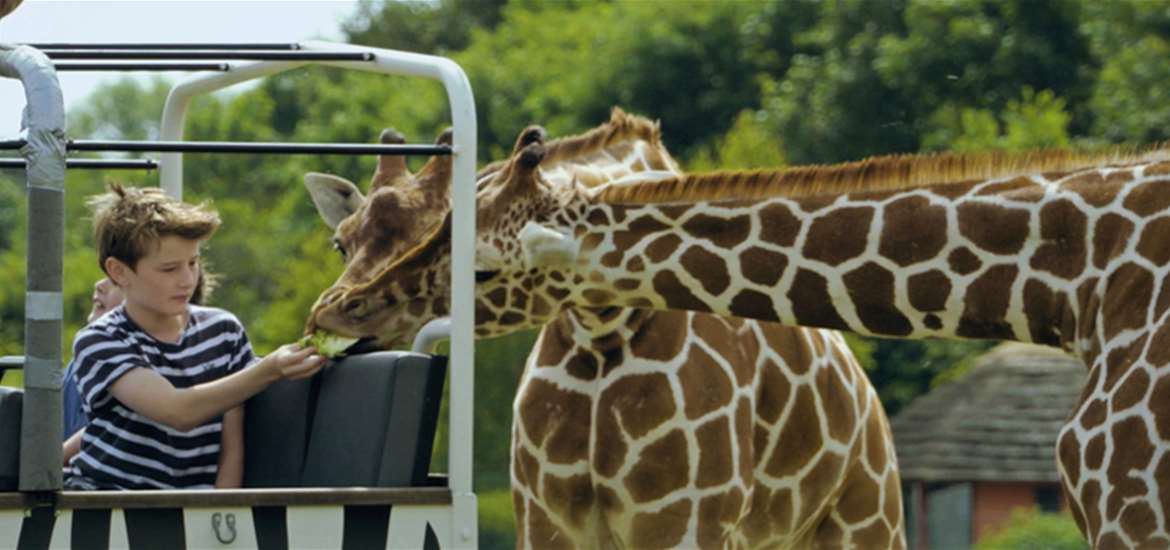 Take a walk on the wild side at Africa Alive!