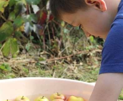 Apple Day at Foxburrow..