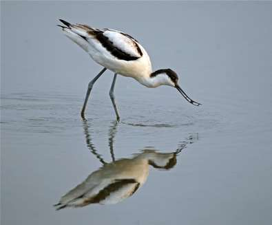 What's On at RSPB Minsmere