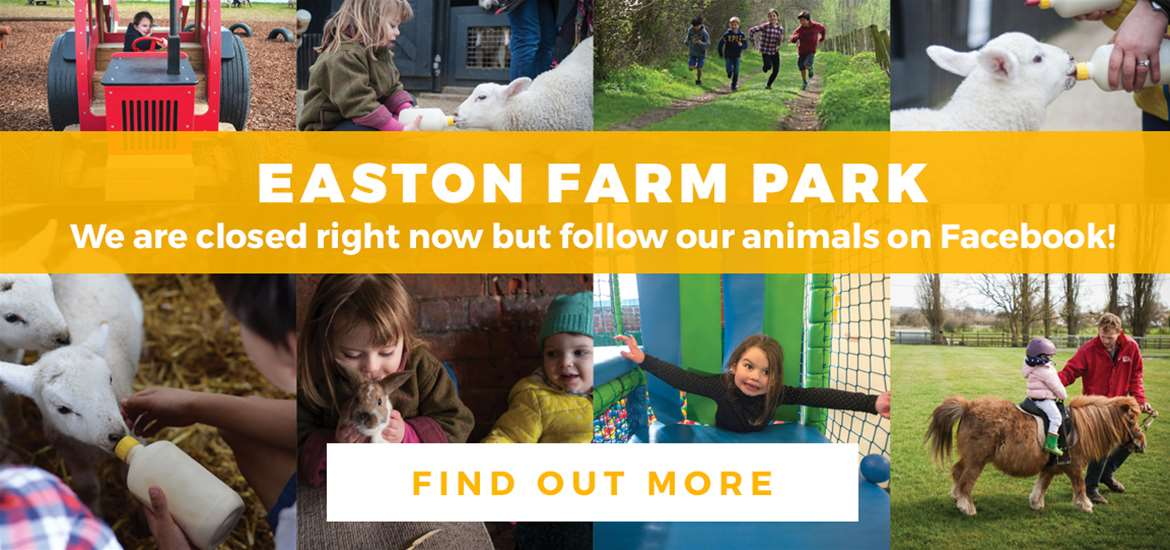 Banner Advertisement Easton Farm Park TTD 20 March 2020