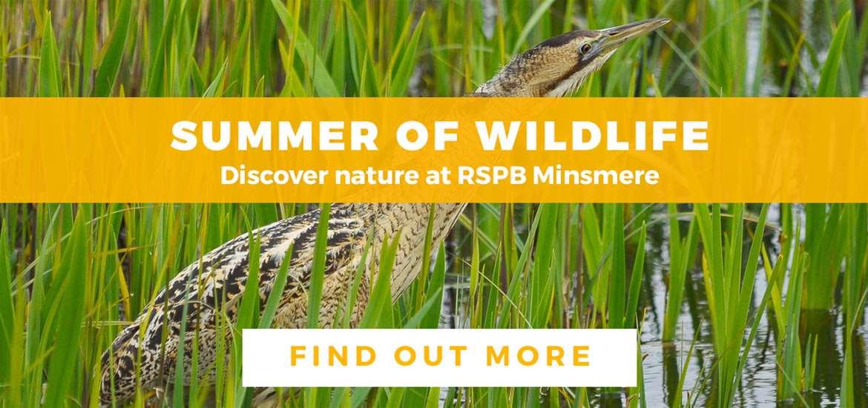 Banner Advertisement RSPB Minsmere July 2019