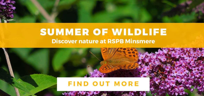 Banner Advertisement RSPB Minsmere