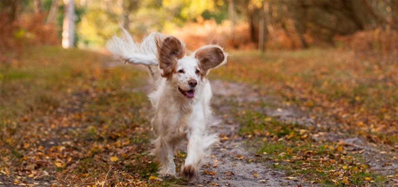 Dog walks on the Coast