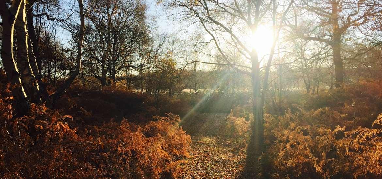 WTS - Best of Suffolk - Woodland
