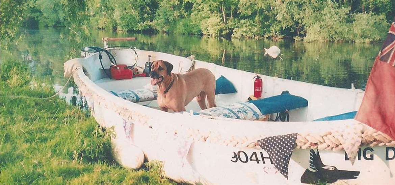 TTDA - Big Dog Ferry- Dog in boat