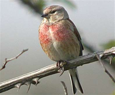Bird Watching for Beginners at Landguard Nature Reserve,