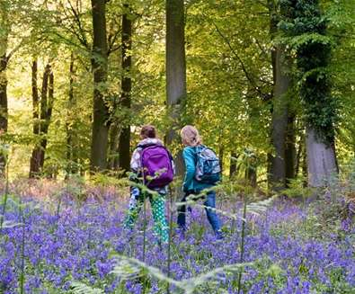 Children Walking in Bluebells - (c) Tony Pick