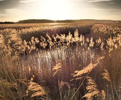 Walberswick Reed Beds (c) Clare Sargeant