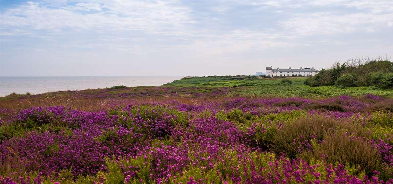 Win a wildlife break on the Suffolk Coast!