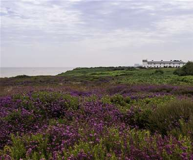 Towns & Villages - Dunwich - heather (Gill Moon photography)