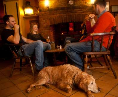 Top 10 Dog Friendly Things to Do - Dog at The Ship at Dunwich - Credit Emily Fae