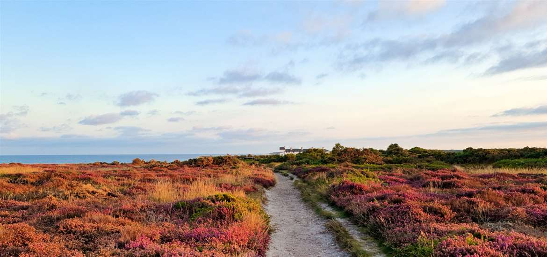 Dunwich Heath - the Suffolk Coast